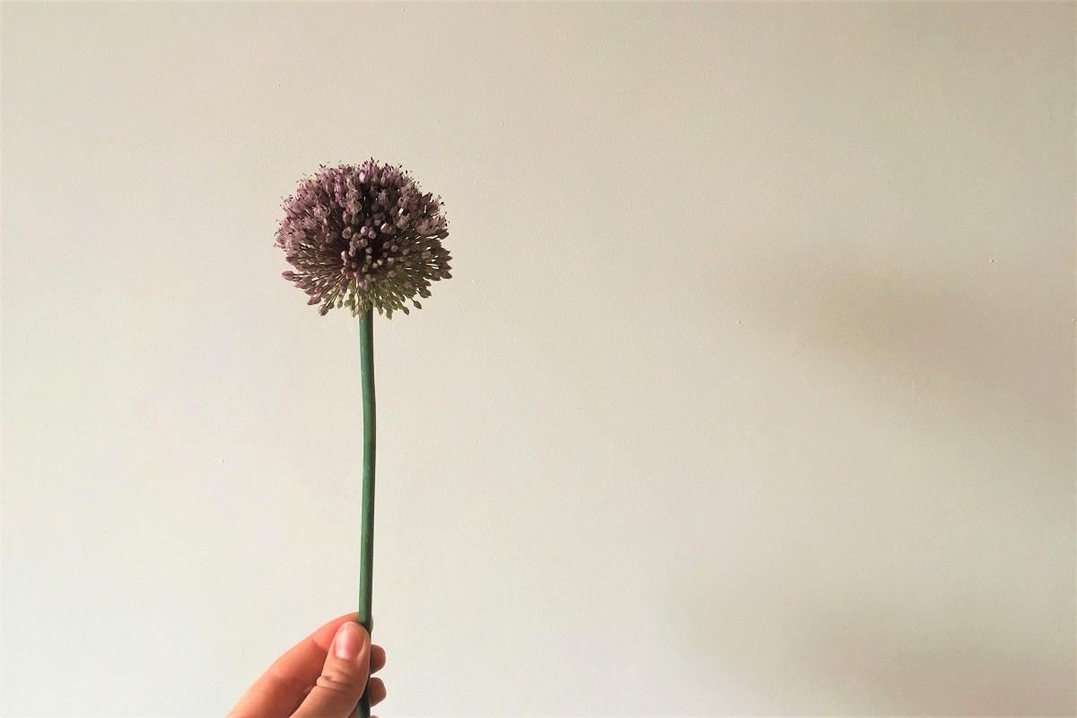 Dankbarkeit Blume